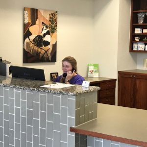 Republic animal hospital appointments near me