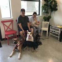 Dogs for Buda Veterinary